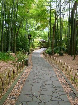 竹林の小ミチ.JPG